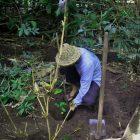 Darmawan Denassa pendiri Rumah Hijau Denassa menanam beberapa tanaman lokal