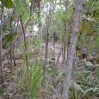 INVESTASI. Pohon Jati koleksi Rumah Hijau Denassa (RHD). Tanaman jangka panjang dapat menjadi investasi bagi keluarga