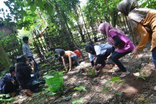 SUNGGUMANAI. staf BaKTI  menanam Sunggumanai/Jabon (Anthochepalus cadamba) di Rumah Hijau Denassa (RHD)anam. staf BaKTI  menanam pohon Jabon (Anthochepalus cadamba) di Rumah Hijau Denassa (RHD)