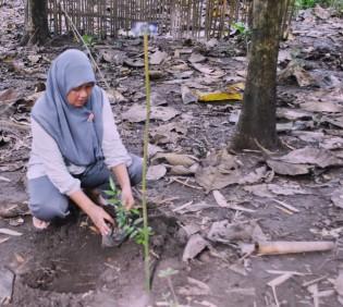 Ratnah Arasy, PO ACCESS Tahap II Sulsel menanam pohon Lobi-Lobi (Flacourtia inermis) di Rumah Hijau Denassa (RHD)