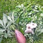 Beberapa Sayur segar yang dapat dipetik di Rumah Hijau Denassa (RHD). Foto: Denassa