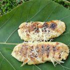 Pisang Epe salah satu menu di Leko Kafe Rumah Hijau Denassa