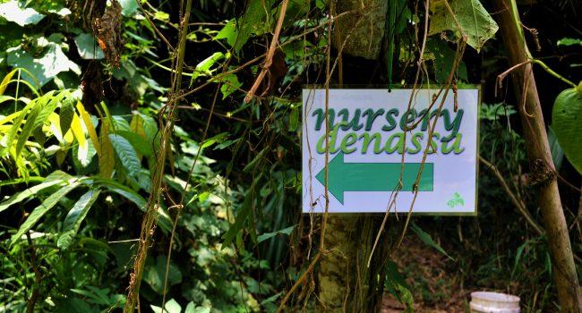 Nursery di Rumah Hijau Denassa dimanfaatkan sebagai tempat perawatan tanaman