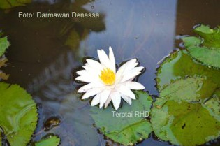 Bunga Talipung sedang mekar di Rumah Hijau Denassa (RHD)