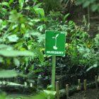 RHD. Nursery Denassa saat ini merawat ratusan benih tanaman (16/07/2014).