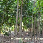 RHD. Areal Konservasi Utara Rumah Hijau Denassa (RHD) dimana salah satu bagiannya contoh tanaman investasi keluarga