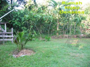RHD. Raint Forest di Rumah Hijau Denassa (RHD) pada Tahun 2010 (24.04.2010)