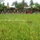 RHD. Kunjungan Klub Belajar Sipatokkong Makassar ke Persawahan Rumah Hijau Denassa (RHD) 19.03.2017