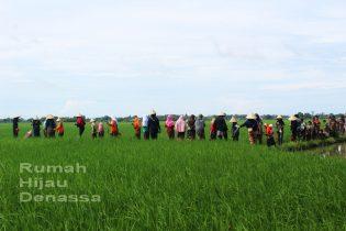 RHD. Peserta Field Trip SDIT Ar Rahmah Makassar Menjelajahi Persawahan di Rumah Hijau Denassa (RHD)