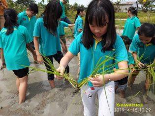 RHD. Siswa Kidsstar School Belajar Tanam Padi di Denassa (15.04.2019)
