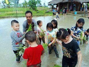 RHD. Siswa TK Eagle's Nest Academy (ENA) Makassar Belajar Tanam Padi di Sawahku (03.05.2019)