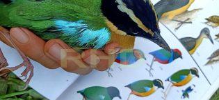 RHD, Burung Pauk Laus yang Sedang Kami Identifikasi dan Dokumentasikan di Rumah Hijau Denassa (RHD) pada 24.11.2019